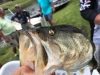 blind-fish